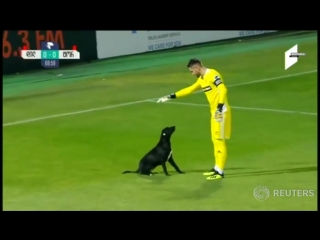Who let the dogs out playful dog invasion becomes highlight of georgia soccer game