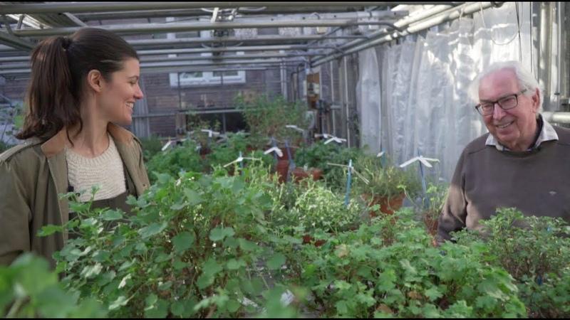 Ep 076: Pelargonium (Geranium) Tour with Hortus Botanicus - Plant One On Me