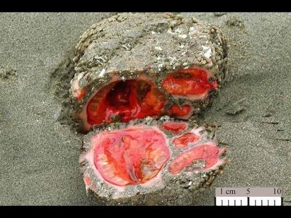 💣 Живые камни: невероятная форма жизни, которую могли подкинуть только инопланетяне! ⚡