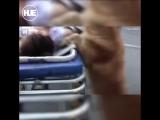 В Китае пёс охранял упавшую в обморок хозяйку, а потом уехал с ней на скорой