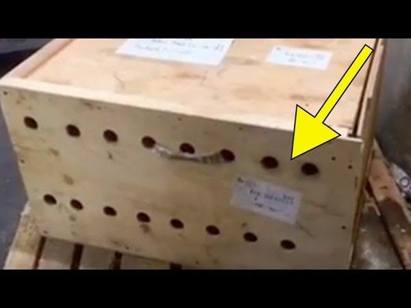 В аэропорту не решались открыть деревянный ящик через 7 дней содержимое повергает всех в шок