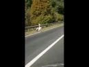 Пеликан возле Экопарка
