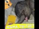 Слонёнка бросила мама!