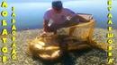 Рыбалка в Кулешовке. Ловля толстолоба на технопланктон.