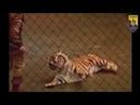 Уся правда про використання тварин у цирках