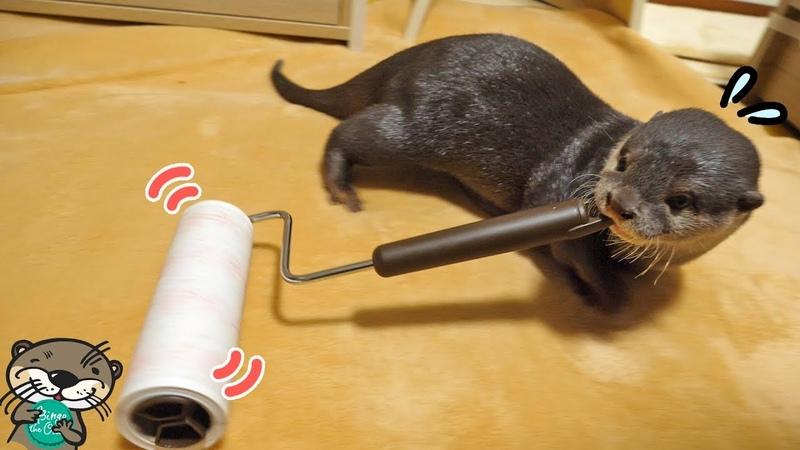 カワウソのビンゴがコロコロの使い方を覚えた日(Otter Bingo learned to use the sticky roller)