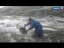 На Ямале двое мужчин спасли застрявшего в трясине оленя