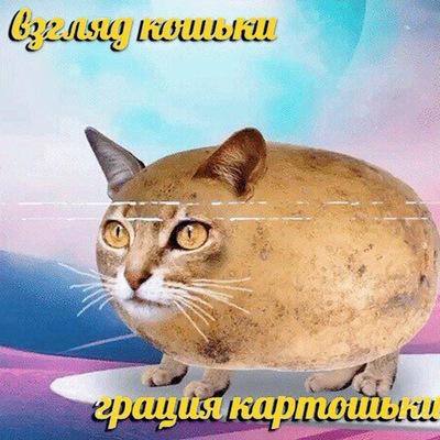 Катя Кудряшова