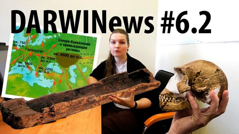 DARWINews 6.2: происхождение европейцев, неандертальцы-мореплаватели, мозги наледи