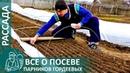 ☘ Всё о посеве рассады по технологии Гордеевых | Выращивание рассады в парнике своими руками