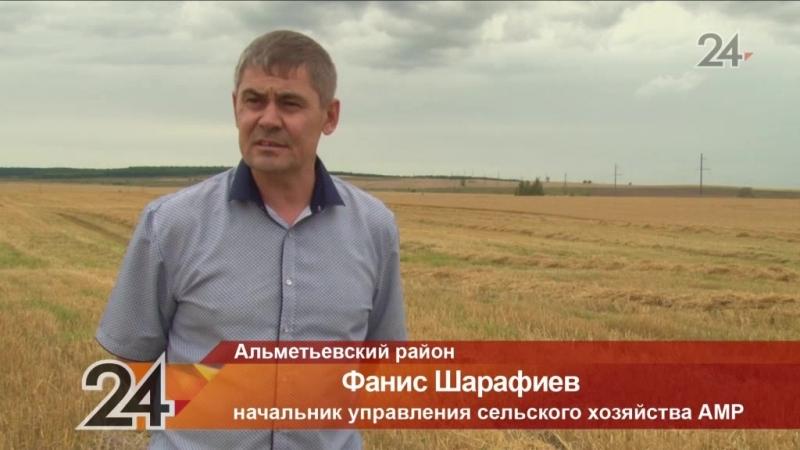 В Альметьевском районе ревизоры Россельхознадзора фиксируют потерю зерна