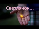 Светлячок - В Мире Природы