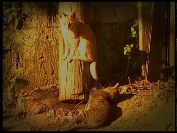 Фильм Святой праведный Алексий Бортсурманский. Студия Артос, 2002 г.