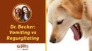 Рвота против срыгивания Vomiting vs Regurgitating