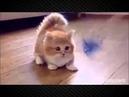 смотреть смешные мультики про кошек1