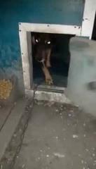 Собака сама закрывает двери в будке