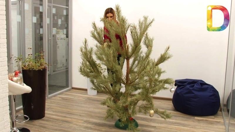 Время разбирать елки как сделать это правильно Новости Долгопрудного