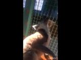 Контактный Зоопарк: Лемур Фил
