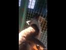 Контактный Зоопарк Лемур Фил