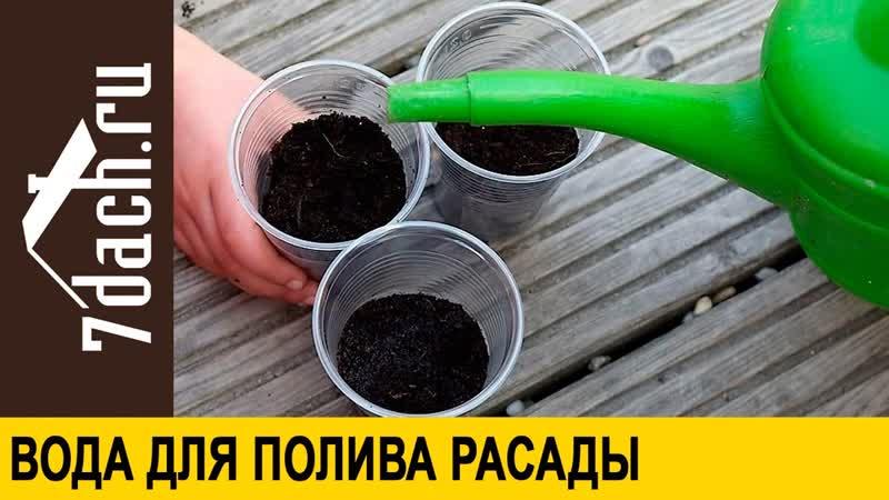 Вода для полива рассады - 7 дач