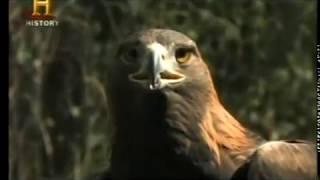 MonsterQuest - Pássaros Gigantes