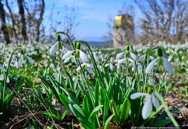 Крым в фотографиях Юрия Югансона Если вам надоели снег или слякоть, серое небо и зимняя тоска вам самое время приехать в Крым в марте! Там уже тепло, солнечно и ароматно. Начинает цвести