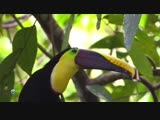 Зеленый рай.Чистая природа.Коста-Рика