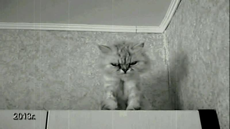Чудо-Юдо. Кошка-Ёжка...