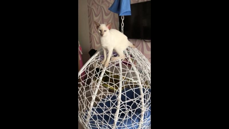 Далила Амалирр 💕 Кошечка свободна. 6 месяцев