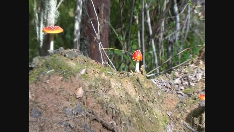 грибы на газопроводе