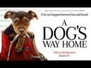 ПУТЬ ДОМОЙ (A DOG'S WAY HOME) - ТРЕЙЛЕР (RUS)(2019)