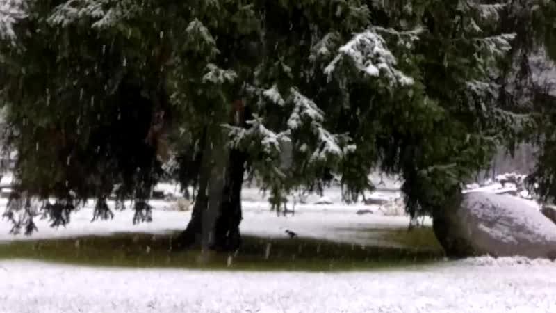 14 ноября 2018 Снег в Алтуне