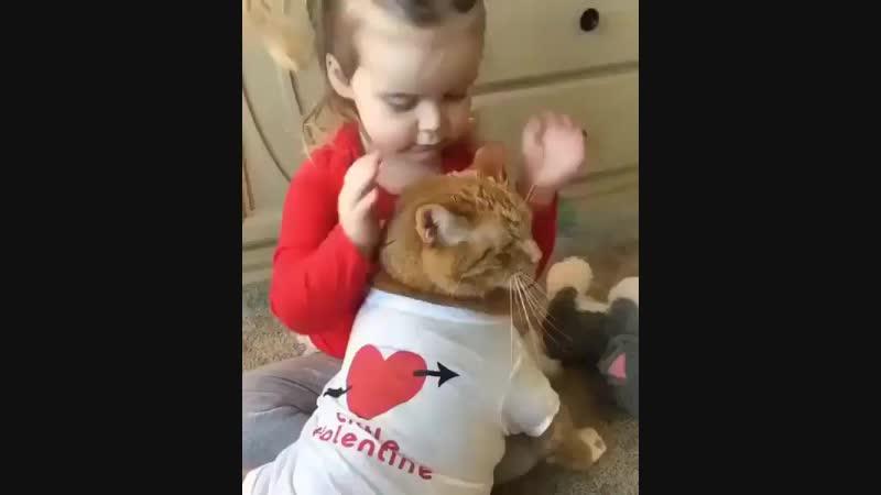 Sweet kitty valentine