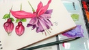 Fuchsia Flower Pen Ink and Watercolor Tutorial