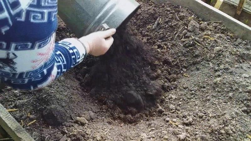 Почему не цветут пионы Маленькие секреты выращивания пионов.
