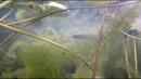 Подводная Охота Лесное озеро Отличный прозрак Красивые кадры подводного мира