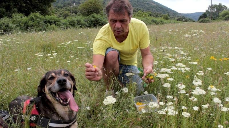 Чудо - растение, которая спасло жизни сотням тысяч людей   Быстрый рецепт » Freewka.com - Смотреть онлайн в хорощем качестве