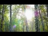 ВИА Самоцветы - Васильковое лето