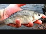 Ловля карася в ноябре- прикормка, наживки и снасти для рыбалки осенью!
