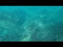 Косяк рыб в гурзуфской бухте 19 09 18
