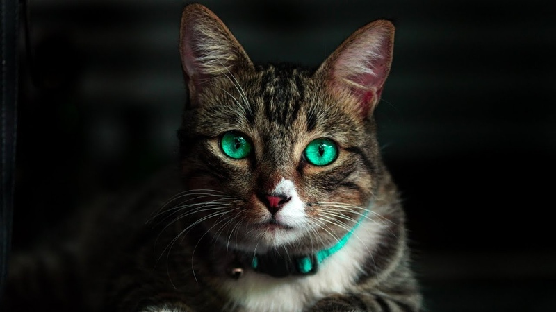 OSU! S3RL feat Sara - Techno Kitty [Challenging]
