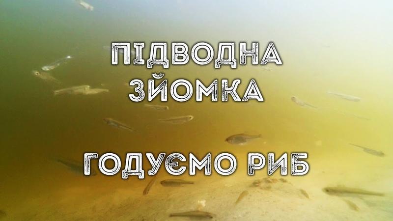 Підводна зйомка годуємо риб (р. Ворскла, с. Гавронці)