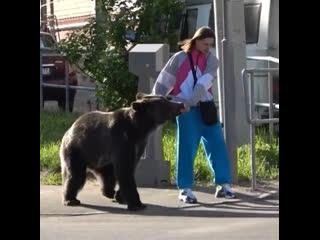 Tommy cash с медведем [рифмы и панчи]