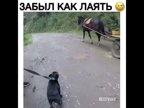 Собака забыла как лаять 2018