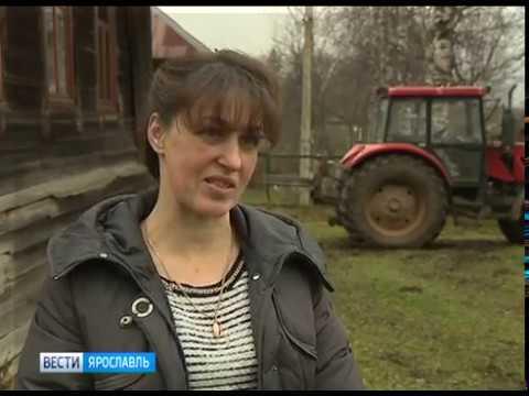В программе «Агровести» - меры поддержки ярославских аграриев