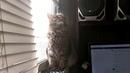 2194). 17.11.2016 - Котик Малфурион (теперь Кузя) живет дома (видео из дома)