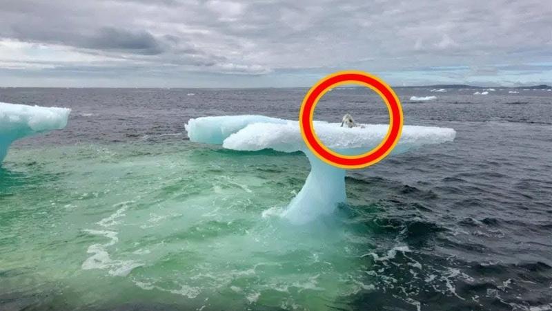 Рыбаки думали что это тюлень на дрейфующей льдине но когда приблизились то сильно удивились