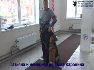 Занятие по дрессировке (группа начального послушания): обучение собак команде Ко мне. Тольятти, 22 декабря 2018.