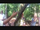 Корица -индийский лавровый лист.