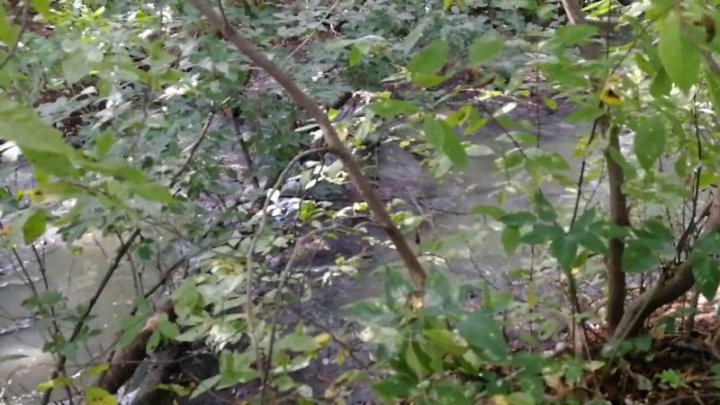 Место сброса гадости в реку Мышега(с очистных-напрямую,а не через отстойник).